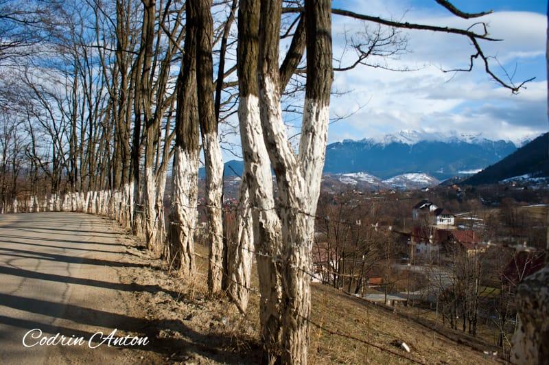 Zona Bran - Moeciu ©Codrin Anton – www.CodrinAnton.ro