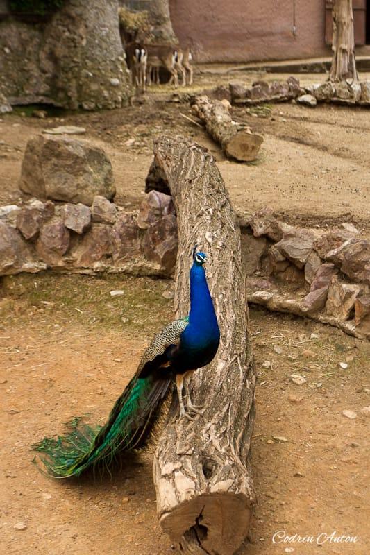 Barcelona ziua 3 Zoo © Codrin Anton FOTOGRAF – www.CodrinAnton.ro