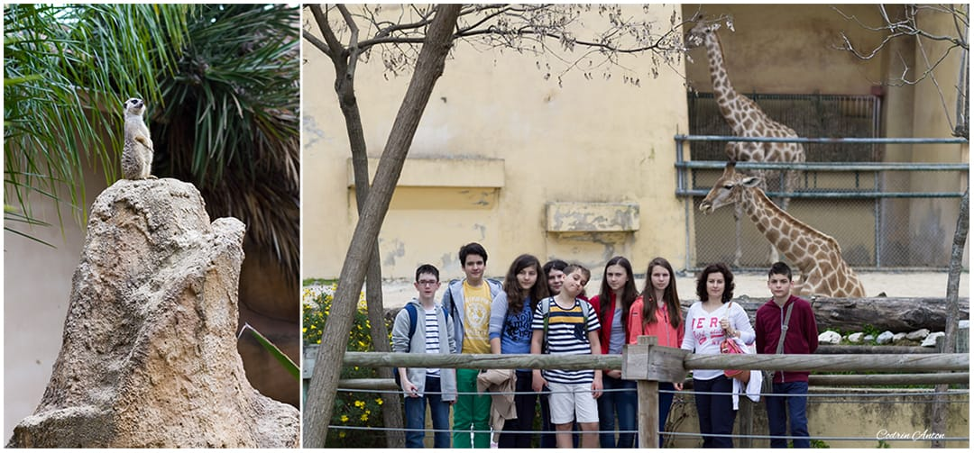Primavara in Lisabona Gradina zoologica aprilie 2014 © Codrin Anton FOTOGRAF – www.CodrinAnton.ro