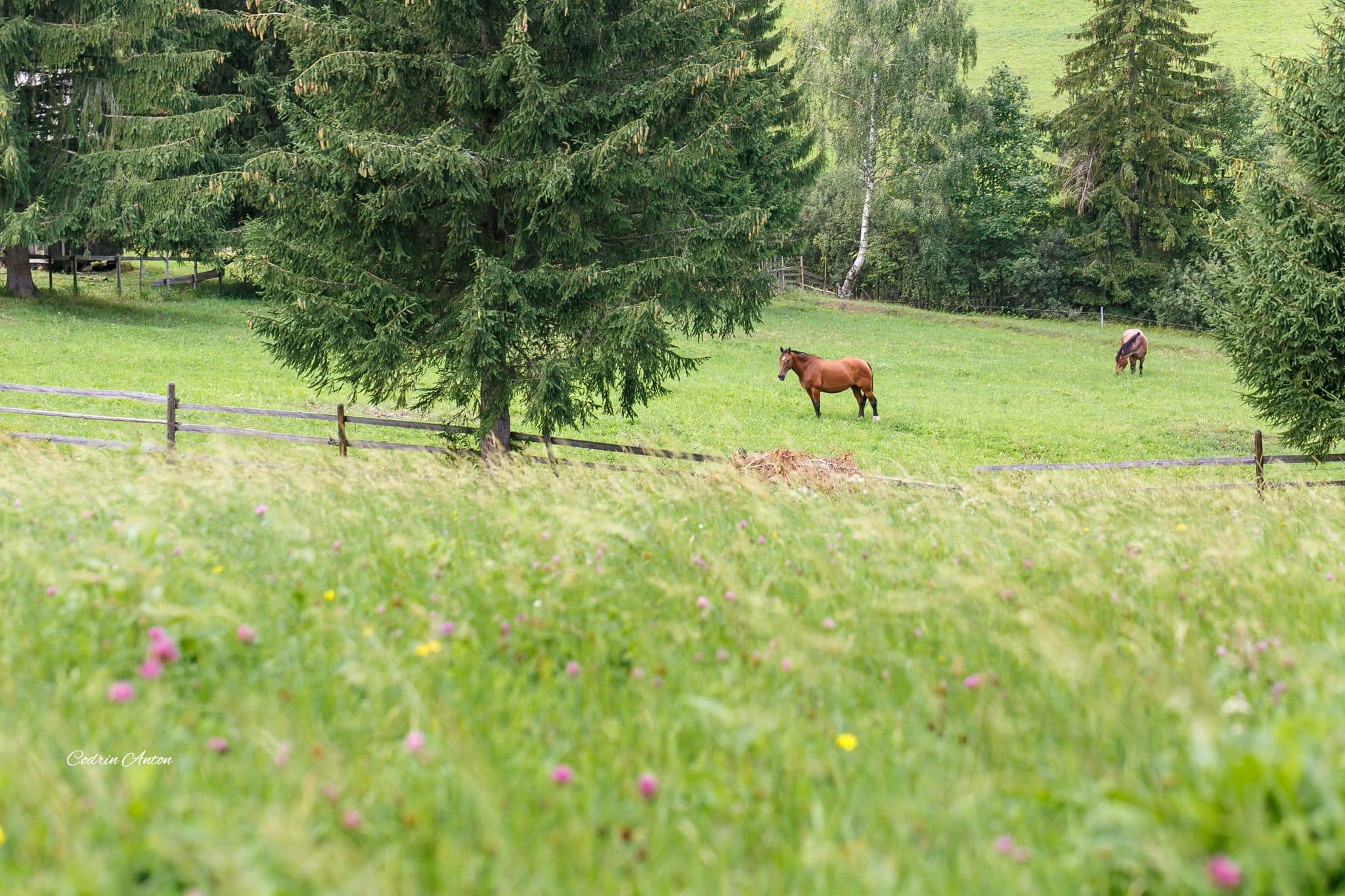 Hai-hui prin Bucovina 3