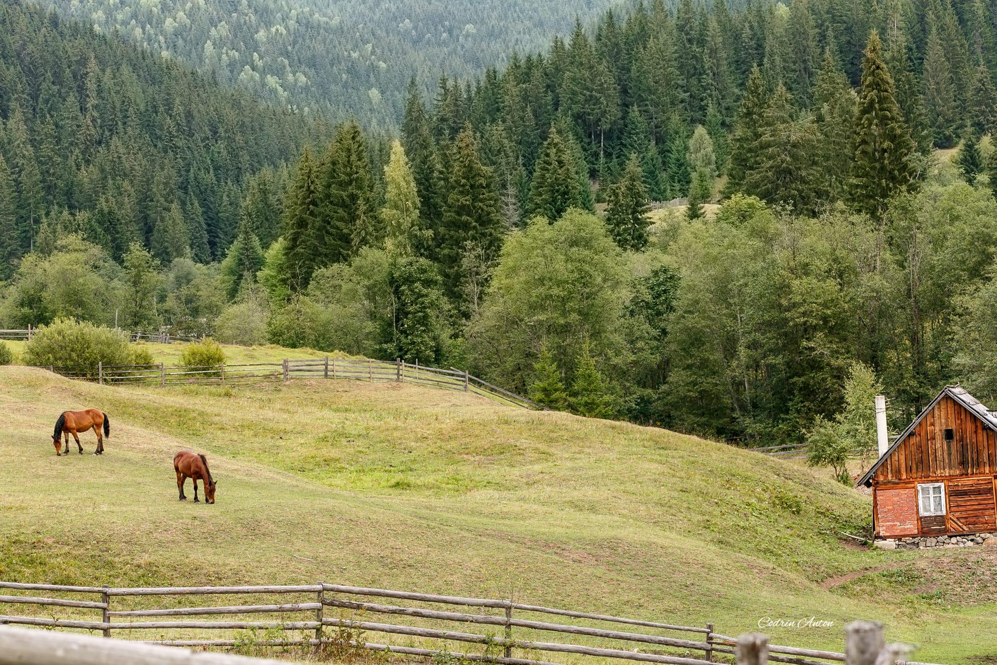 Hai-hui prin Bucovina 6