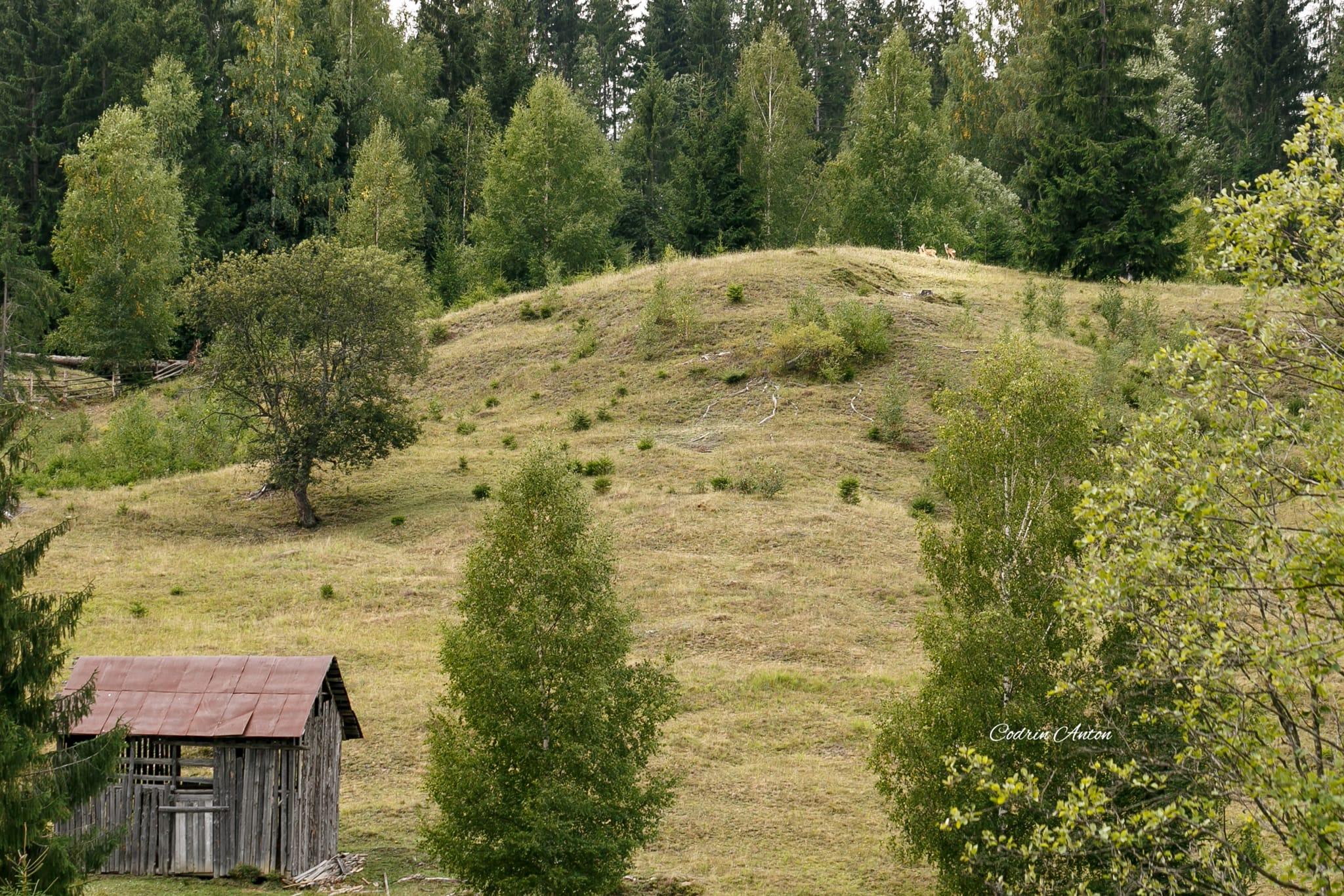 Hai-hui prin Bucovina 5