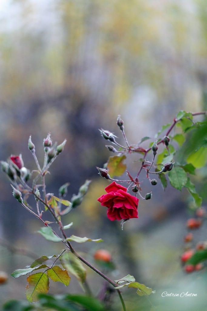 Toamna 2017 @ Falticeni © Codrin Anton FOTOGRAF – www