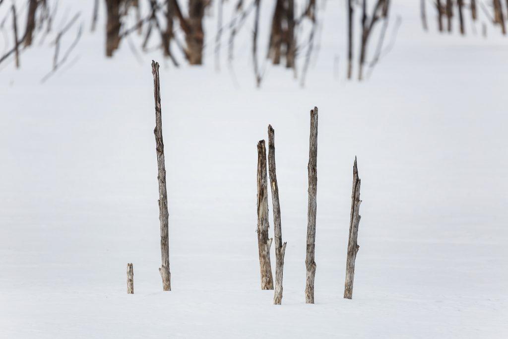 Lacul Cuejdel, iarna - Natura